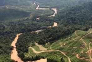 Mongabay Sarawak ts