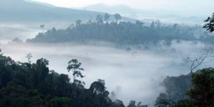 forest_landscape_113456