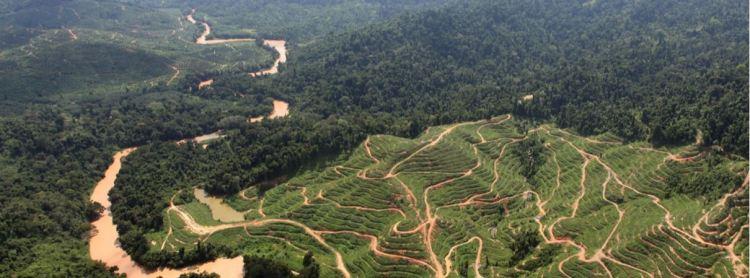 Mongabay Sarawak pic